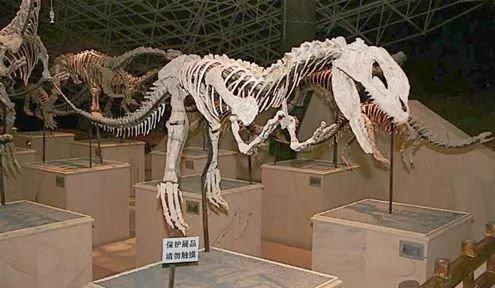 恐龙化��-a9��_恐龙化石之最:潼南恐龙化石