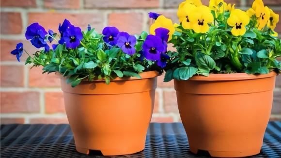 花盆不用花钱买,教你自制在家做,比买的还实用,隔壁邻居抢着要