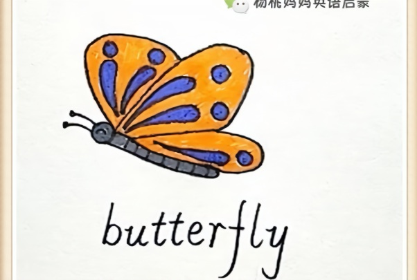 英语启蒙简笔画单词卡butterfly蝴蝶