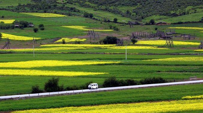 每镇补助1000万元!云南12乡镇入选今年全国产业强镇建设名单