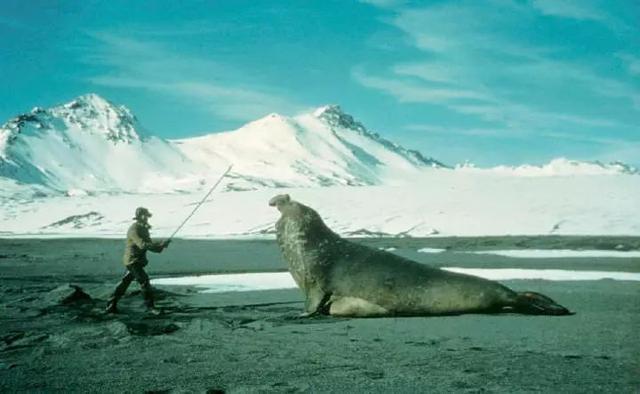 海豹,海狮,海象,海牛,到底谁有毛?