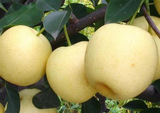 梦见卖梨是什么意思