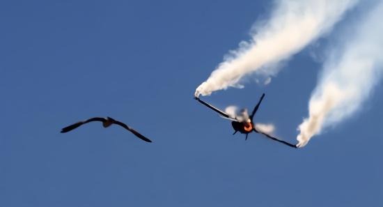 印度防长:巴军F16飞行员跳伞后被本国村民打死