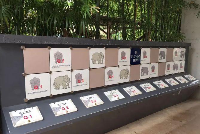日本动物园海报,又赢了