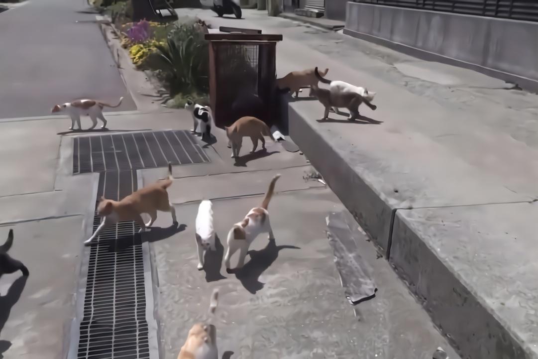 """日本的这座岛上,猫咪的数量是居民数量的七倍,被称为""""猫岛"""""""