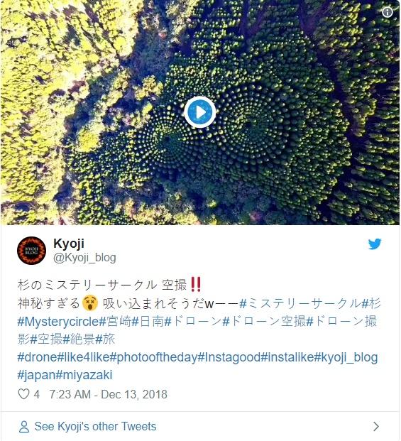 杉树林出现2个同心圆状图形 科学家耗费50年实验形成