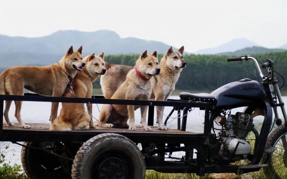 广西原生猎犬 带你解读一段鲜为人识的故事