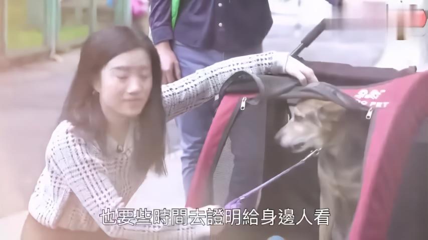 香港大学生给宠物做保姆,很喜欢宠物