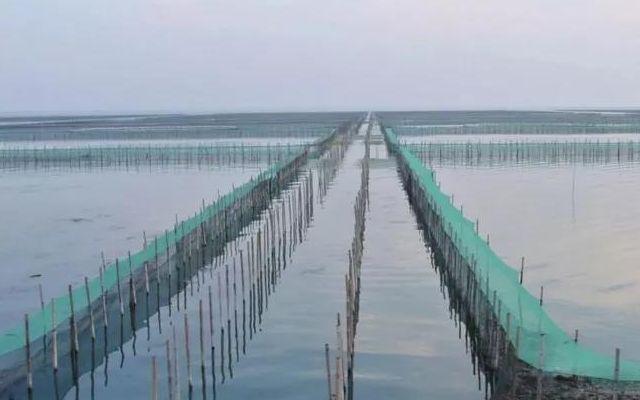 44981亩太湖围网全拆除 太湖围网养殖成历