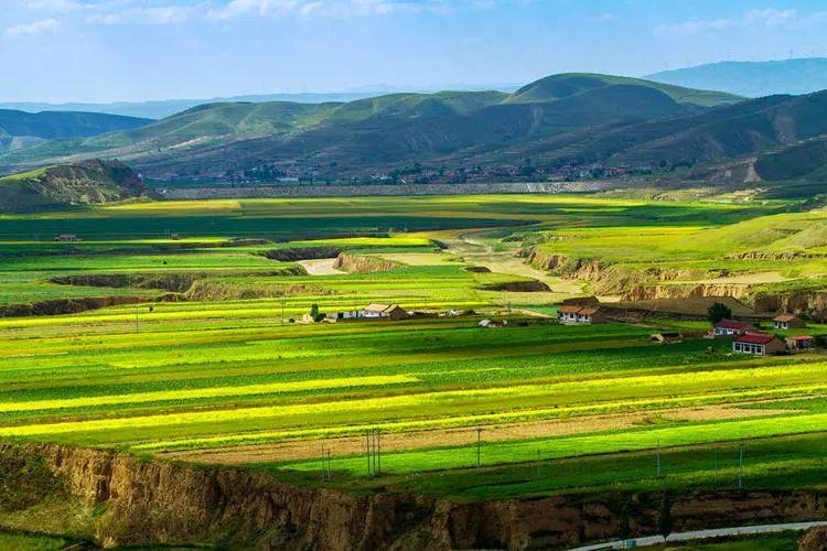 发现:中卫大山里藏美景,不仅有梯田油菜花竟然还有百合花…