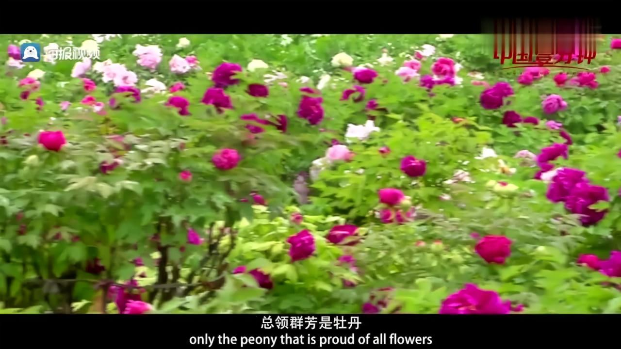 菏泽市委常委、宣传部长陈强向世界推介菏泽牡丹