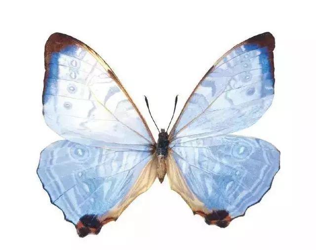 心理测试:凭直觉选择你最喜欢的蝴蝶,测测你的命运是由谁做主?