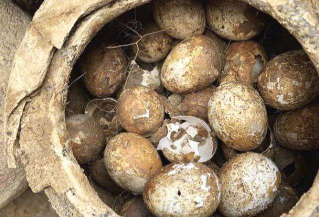江苏省溧阳春秋古墓发掘 惊现2500年前的鸡蛋